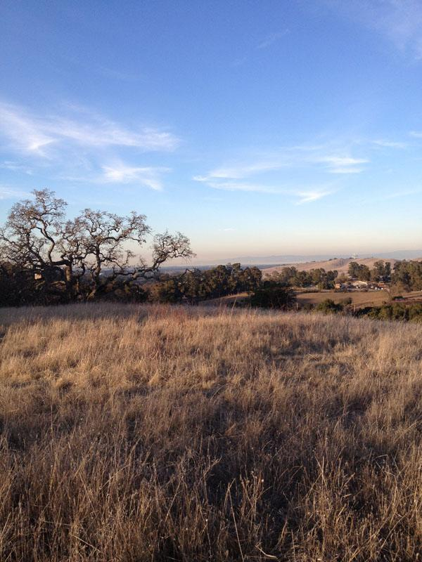 The hillsides at Arastradero Preserve are usually an emerald green this time of year, but due to the lack of rain are now a golden brown.